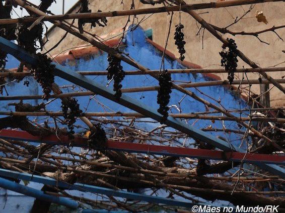 Vinhas em Chefchaouen, no norte do Marrocos